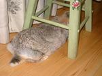 うさちゃん椅子の下で.jpg
