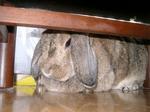 ウサギ09201画像 030.JPG