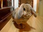 ウサギ09202031.JPG